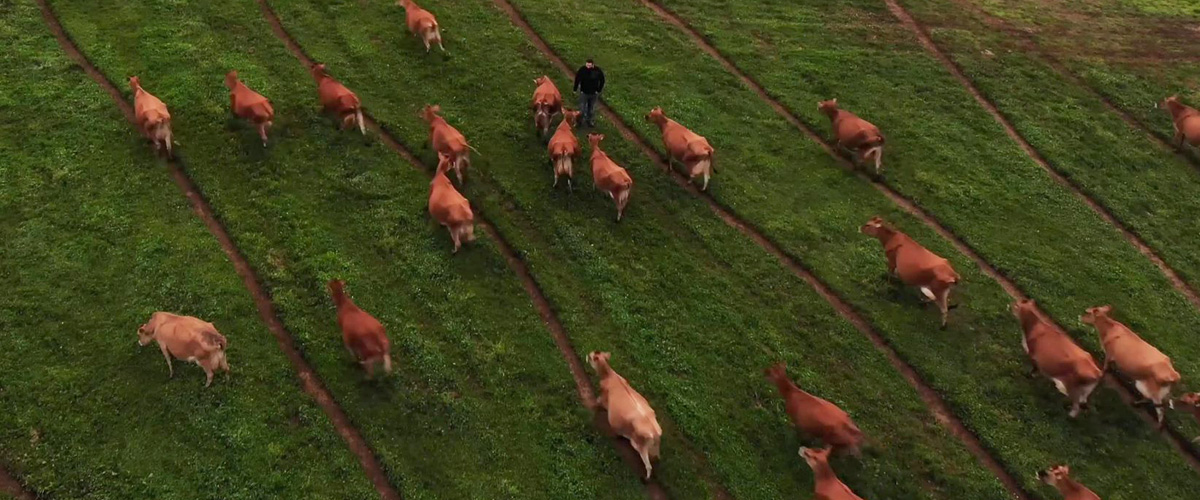 CowPaths